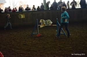 Wedstrijden 2012 - zo - hondenshow
