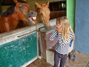 Ponykampen 2011 - Minikamp