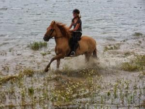 Ponykampen 2011 - Pluskamp