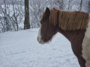 winter252020102520006