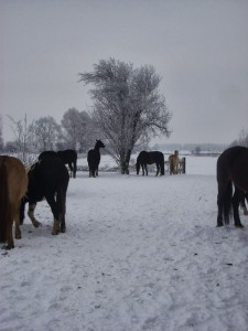 winter252020102520026