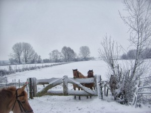 winter252020102520053