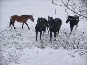 winter252020102520058