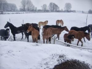 winter252020102520064